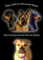 ending-dogs.jpg